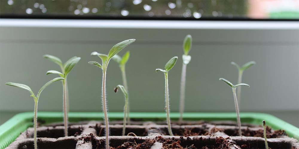 Pflanzen Vorziehen